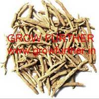 Ashwagandha Seeds