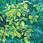 Herbal Extracts Manufacturers, Exporters, Traders