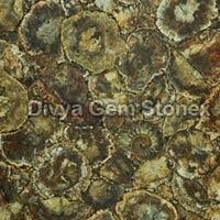 Petrified Wood With Ammonites