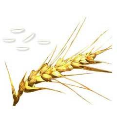 Arti Roller Flour Industries - Wheat Flour Manufacturer