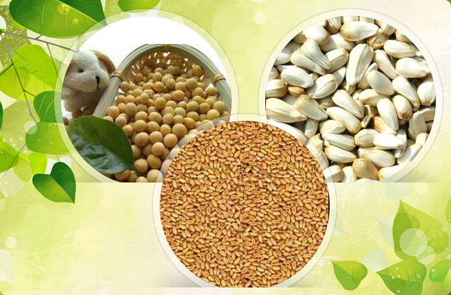 Organic Raw Cotton,Organic Raw Cotton Bales,Raw Organic