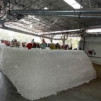 Raw Cotton Heap