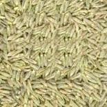Cumin Seeds Jeera,White Cumin Seeds Exporters,Organic ...