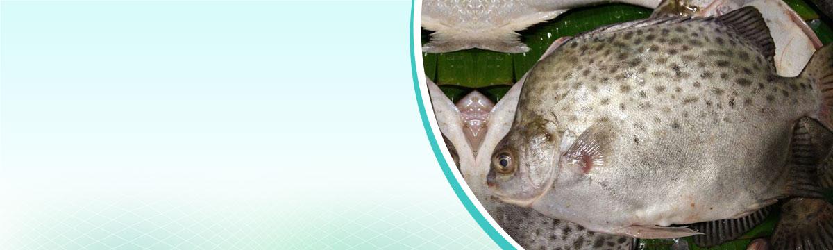Halder All Fish Seed Supplier & Farming - Wholesale Fish