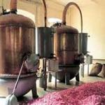Distillation of Rose Water