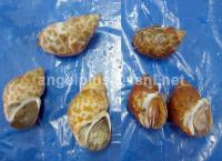 Frozen Crustaceans