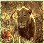Wildlife Tour India,Wildlife Tour Packages,Holiday Travel Packages,Wildlife Vacation Tour