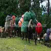 Trekking goods being carried by horses