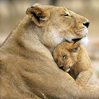 Wildlife Tours India, Indian Wildlife Tour, Bandhavgarh Wild Life Sanctuary, Wildlife Tours in India