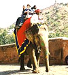 Elephant Ride in Rajsthan