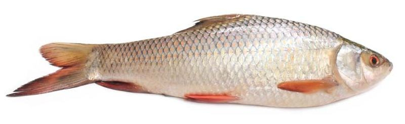 Amazing health benefits of Silver Rohu Fish