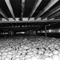Mushrooms On Bed 01