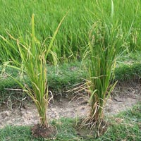 Direct Paddy Seeder FAQ/Help  For the knowledge of the clients we have give below answers for Frequ