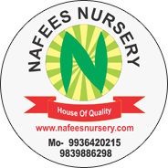 NAFEES NURSERY & EXPORTER