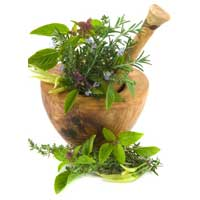 Medicinal Herbs Suppliers
