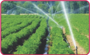 Agriculture & Irrigation