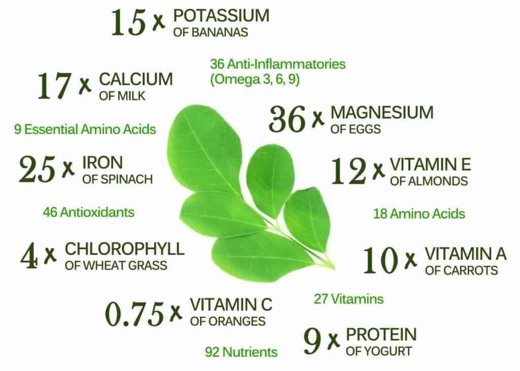 Moringa Is Very Nutritious