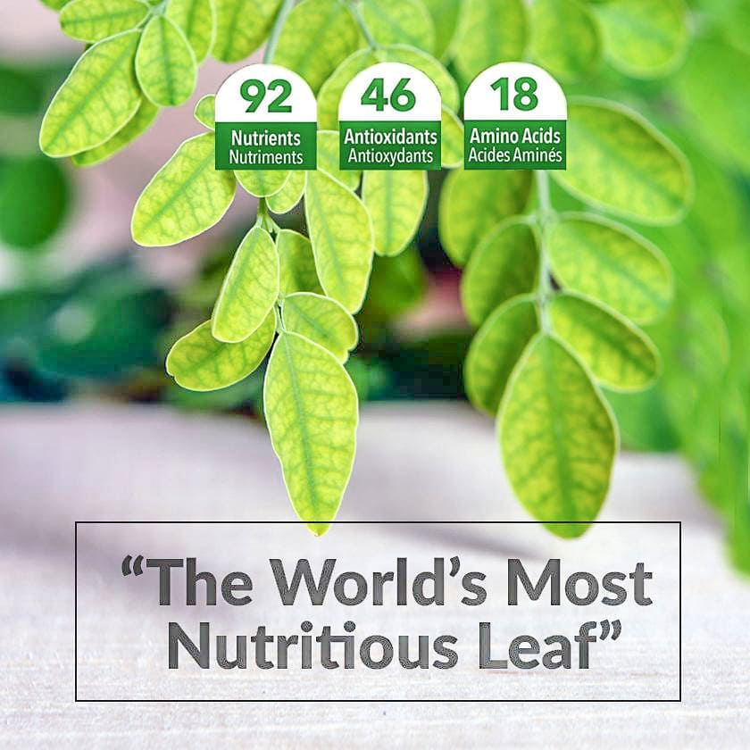 The World's Most Nutritious Leaf