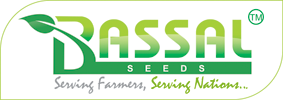 Bassal Seeds Company