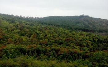 Mathikettan Forest View
