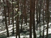 Tour 2(forest tour):