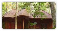 Barefoot - Jungle Resort
