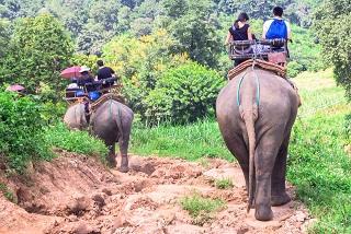 <strong><center>ELEPHANT RIDE:- </center></strong>