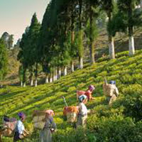 Darjeeling / Sikkim Tours