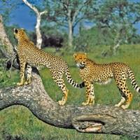 Wildlife Tour