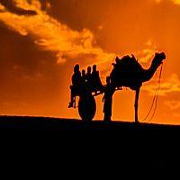 Camel Cart Safari