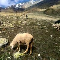 Winter Kuari Pass Treks