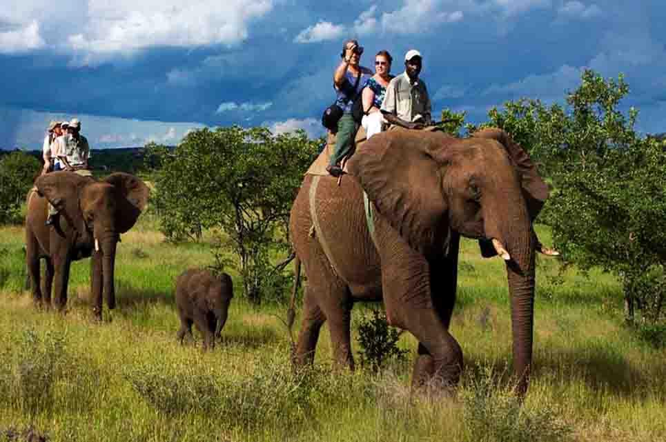 Bijrani Safari