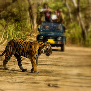 Jungle Jeep Safari