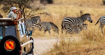 Wildlife Safari