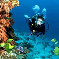 Scuba Diving Services