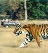 Jungle Safari in Rajasthan