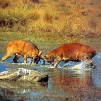 Manas National Park
