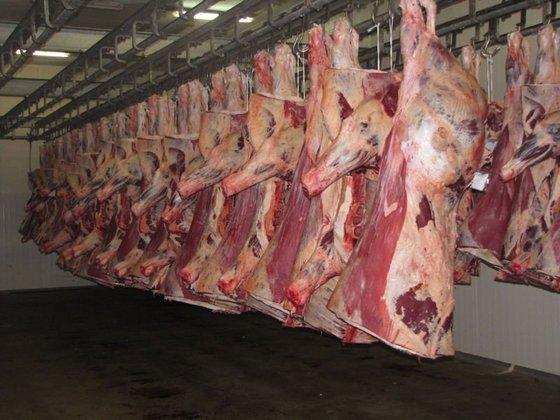 How To Right Get Lamb Meat For Your Business?